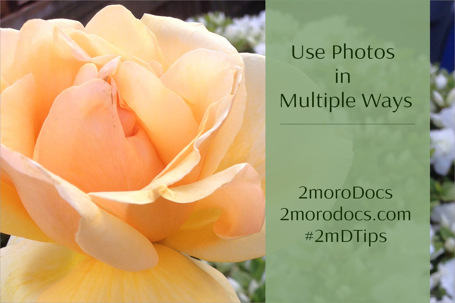 2moroDocs Tips Multiple Use of Images